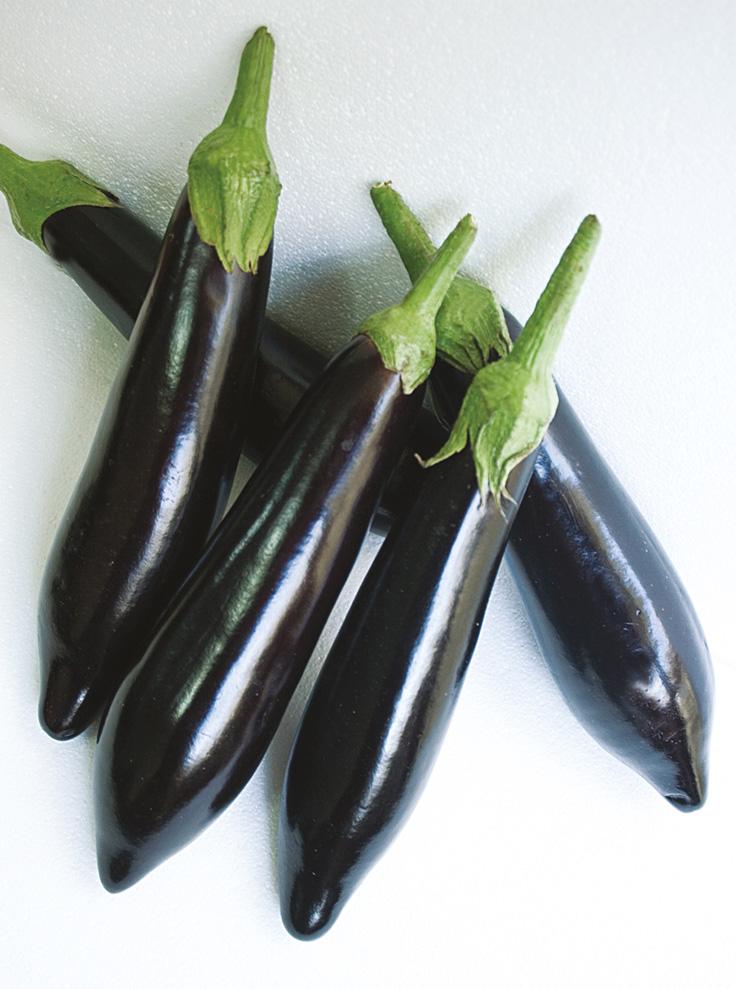 Turkse aubergine